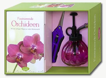 orchideen k nigliche blumen event. Black Bedroom Furniture Sets. Home Design Ideas